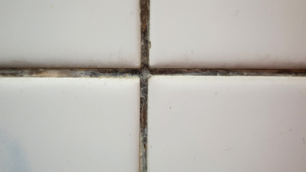 preventing mold in the bathroom